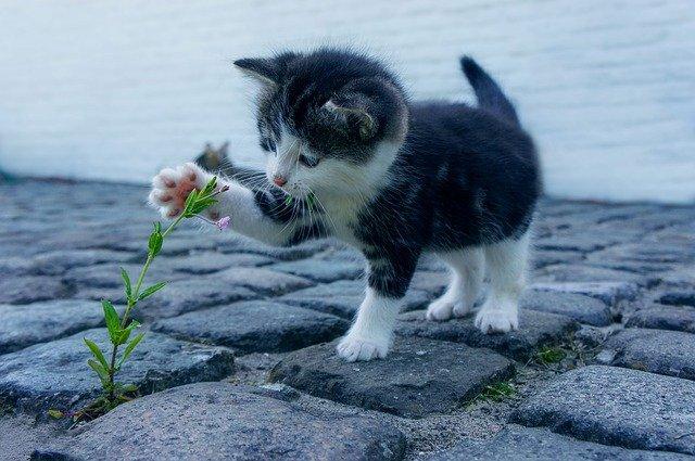 květina a kočička